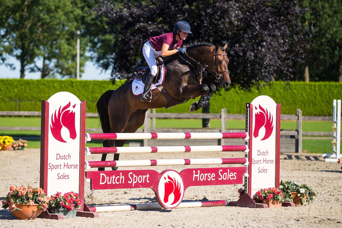 Veiling Dutch Sport Horse Sales @ De Peelbergen